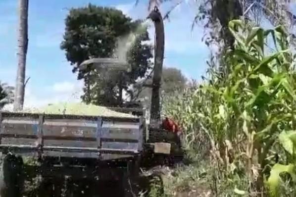 Prefeitura de Montes Altos segue realizando silagem para beneficiar produtores